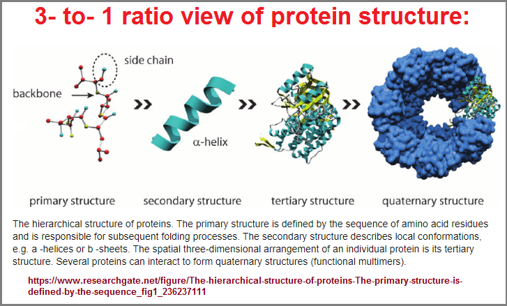 3 to 1 protein structure view