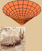 antlion and pit