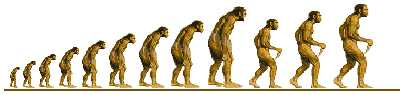 Hominid line of descent