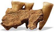 Torquay jawbone piece (7K)