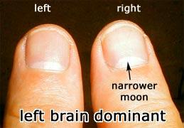thumbs indicating left-brain dominance